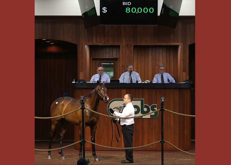 Colt by Stay Thirst out of Granny Mc' Kitten worked 9.4 and sold for $80,000 at the OBS two year old in training