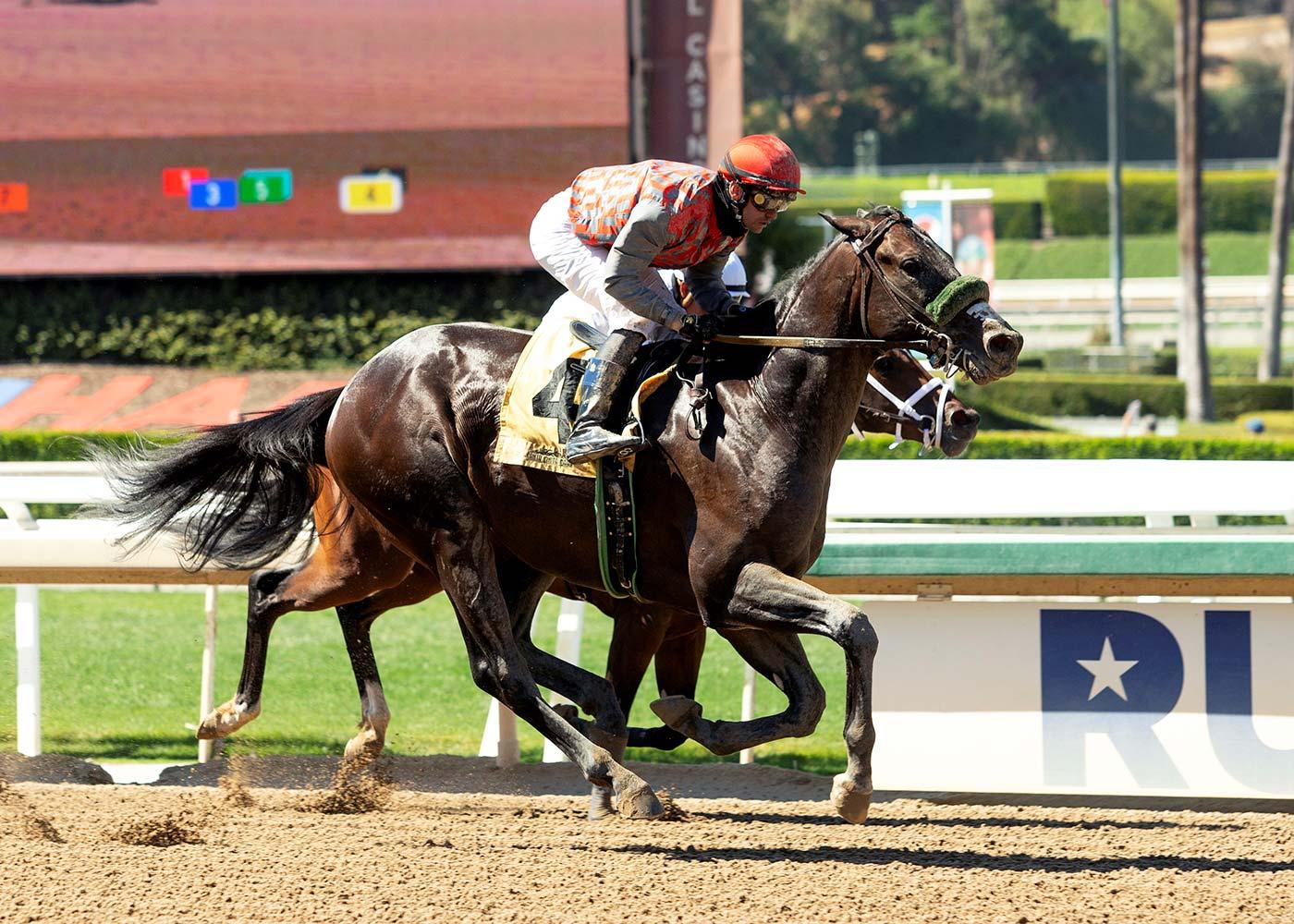 Finneus racehorse wins race