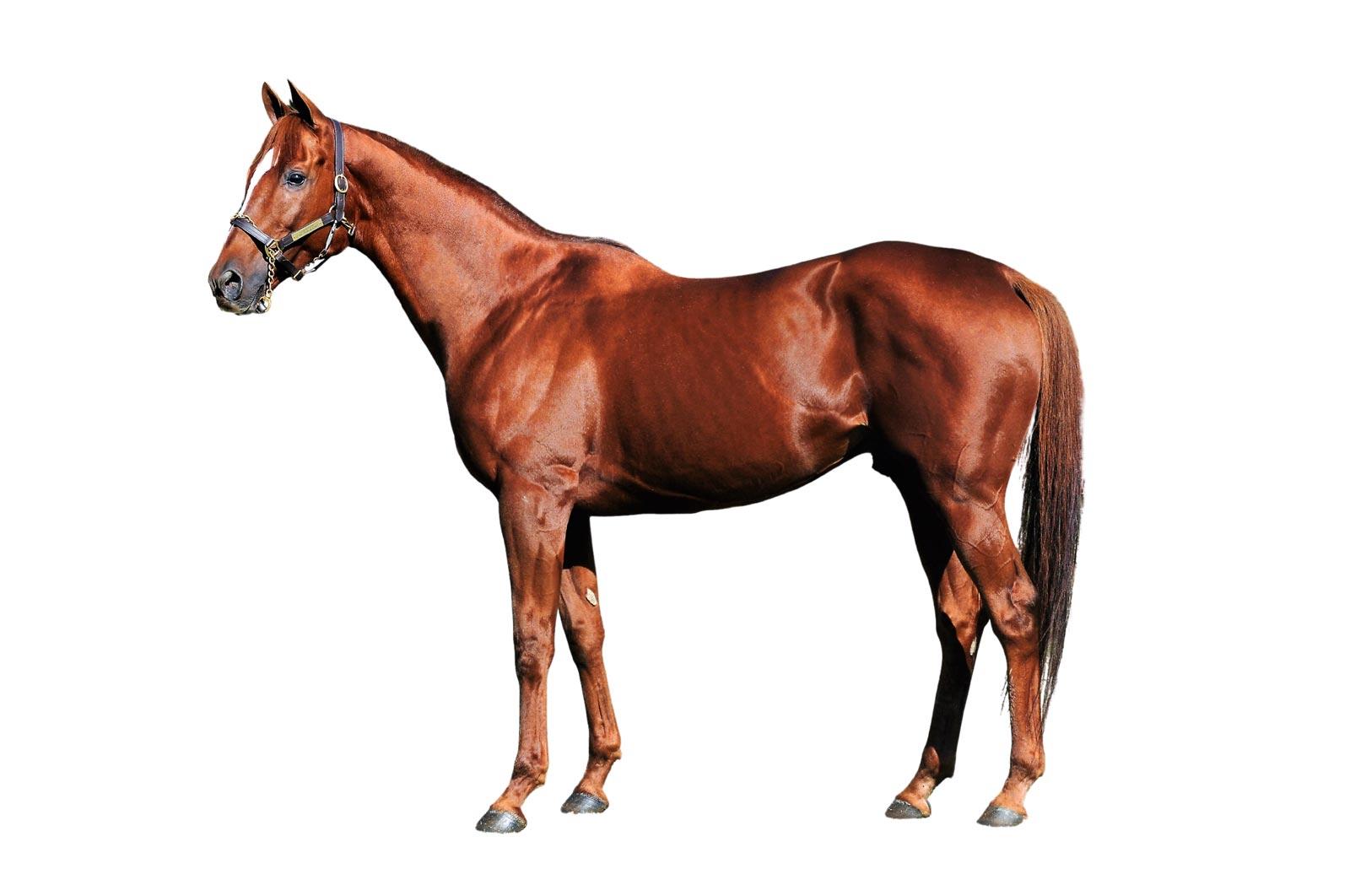 Lovacres Race horse Oscar Nominated