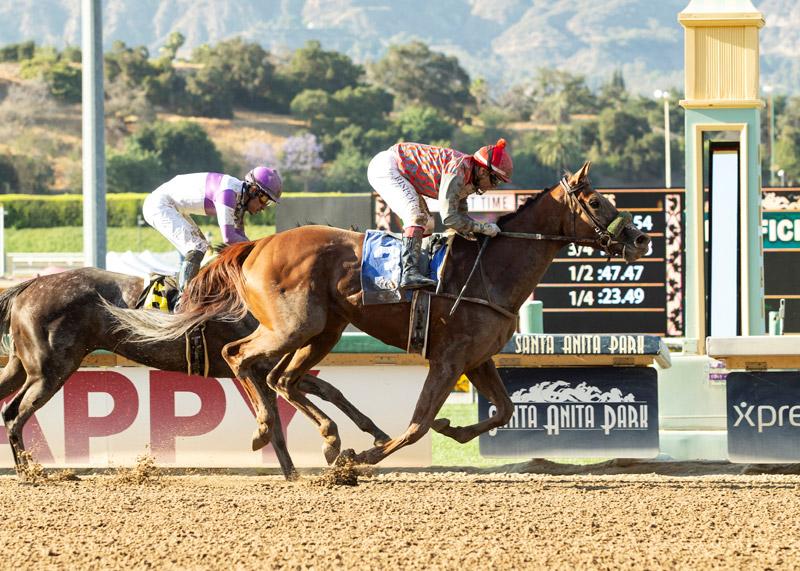 Fi Fi Pharoah Racehorse wins race