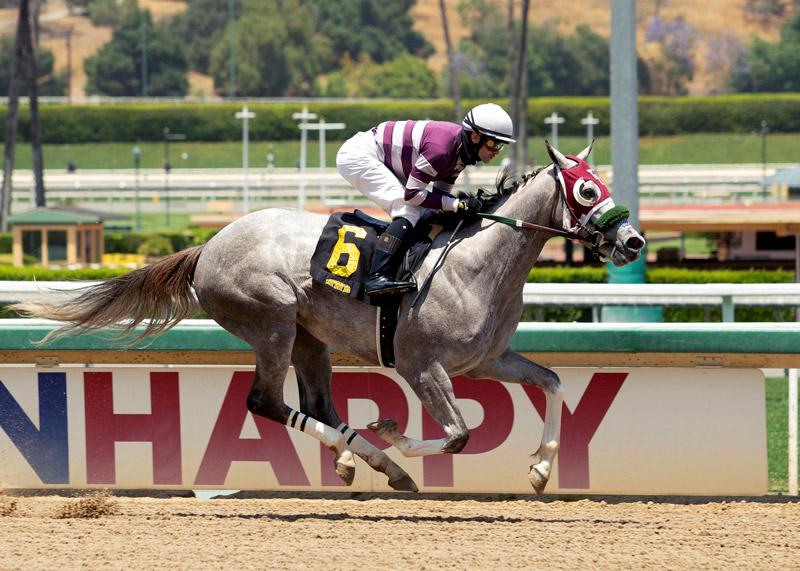 Munny Penny racehorse wins race