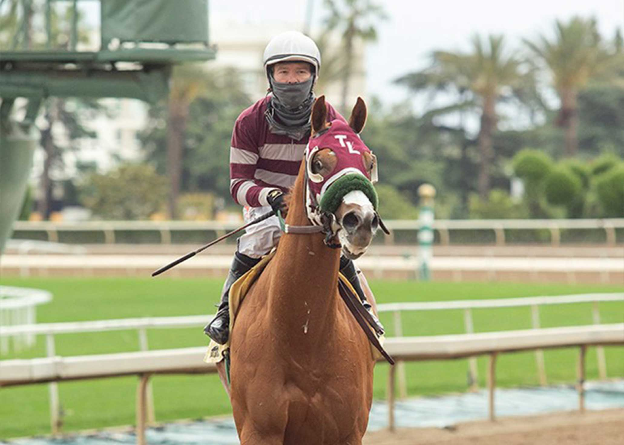 Lovacres Stay Thirsty Racehorse